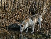 The Wild Stray Dog.
