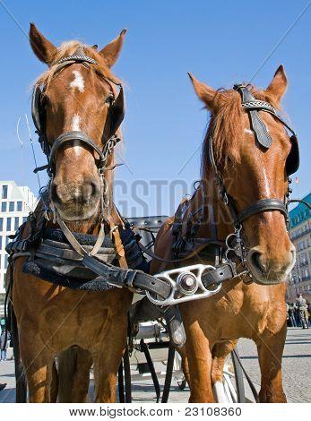 Horses in Berlin