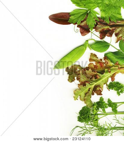 Herbal border on a white background