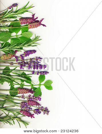 Herb border on white, including rosemary,  mint and lavender.