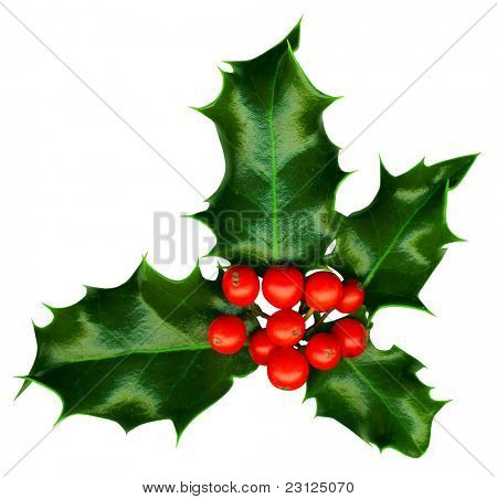 Clipping path. a sprig of holly isolated on a white background