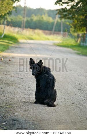 longed dog
