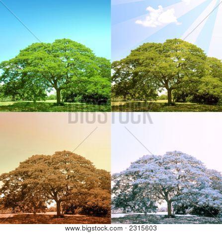 4 Seasons On A Tree