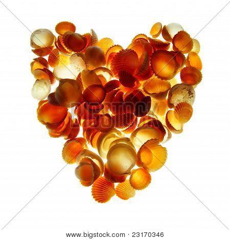 Seashells Heart