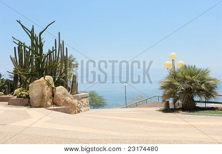 Oasis On The Shore Of The Dead Sea