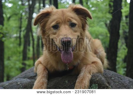 poster of Cute Yarouth Toller Dog Sitting On A Huge Dog
