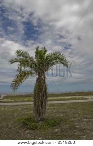 Solitary Palm Against Sky