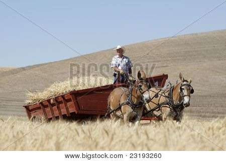 Horse Drawn Wheat Wagon.