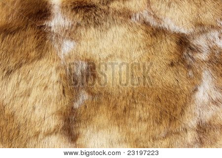 Brown Animal Fur Close Up