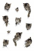 Kittens In Holes Of Paper, Little Grey Tabby Cats Peeking Out Of Torn White Background, Ten Funny Pl poster
