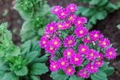 Flower In Garden At Sunny Summer Or Spring Day. Flower For Postcard Beauty Decoration And Agricultur poster