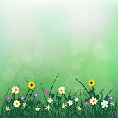 Wild Flowers Plant And Grass On Green Blurry Bokeh Background. Nature Spring Or Summer Abstract Flor poster