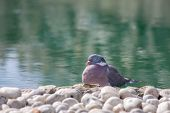 Zen Garden Serene Nature Image. Serene Bird By Ornamental Pond. Peace And Tranquility For A Lucky Pi poster
