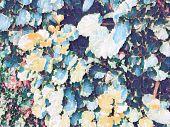 Tropical Foliage Plant In Sunny Garden. Summer Foliage Pale Digital Illustration. Natural Leaf Ornam poster