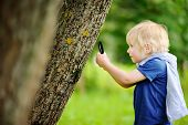 Charming Kid Exploring Nature With Magnifying Glass. Little Boy Looking At Tree With Magnifier. Summ poster