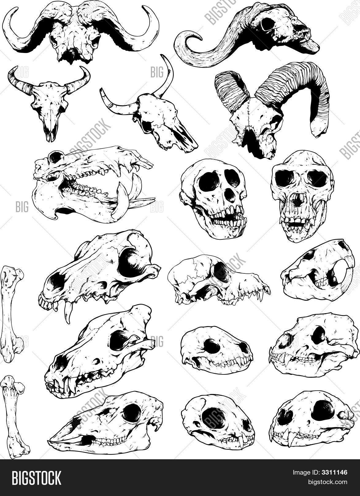 images of animal skull line drawing spacehero