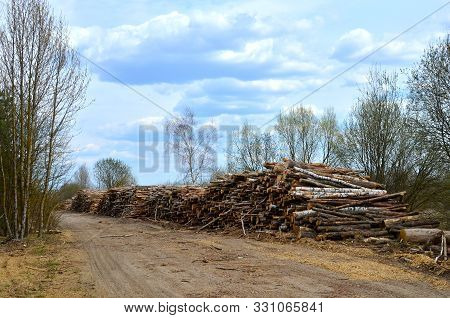 poster of Logs Stacked On Logging And Woodworking Industry. A Stock Pile Of Timber, Chopped Down Trees. Timber
