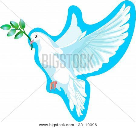 The white dove of peace, it is isolated