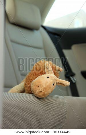 Teddy Camel
