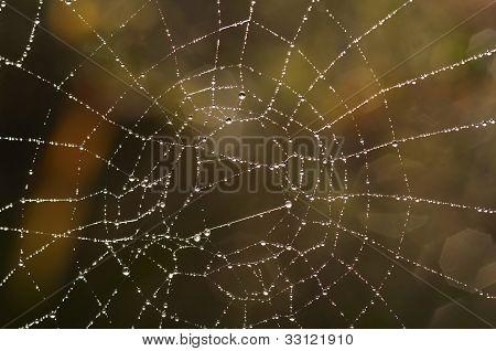 Cobweb With Glistening Dewdrops