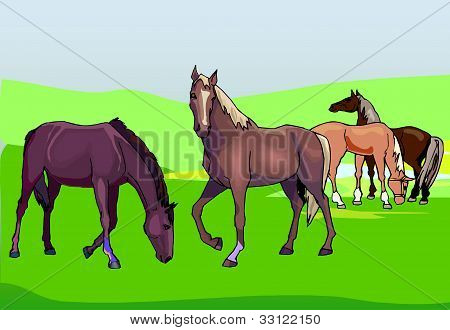 Horses On The Green Pasture