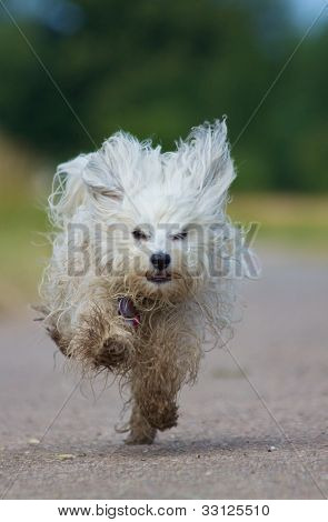 Dog runs frantically