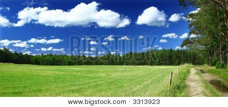 Panoramic View On Grass Field, Forest And A Path