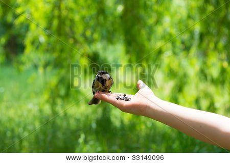 Child And Bird