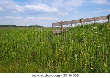 Closeup Of A Rural Landscape In Springtime