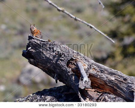 sitting on a log