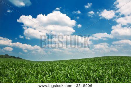 Fresh Sky