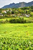 stock photo of luzon  - Philippines mountain village and tobacco field - JPG