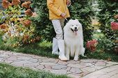 Mature Woman Posing With Her Cute Pedigree Dog In Park poster