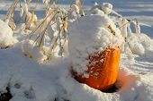 Halloween Pumpkin In The Garden Covered In White Fluffy Snow From An Early Unexpected Snowfall In Oc poster
