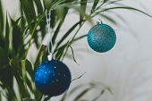 Alternative Christmas Tree Palm Plant With Christmas Baubles For The Festive Season In Summer For Th poster