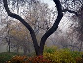 Autumn Nature - Misty Autumn View Of Autumn Park Alley In Dense Fog. Autumn Landscape Scene - Lonely poster
