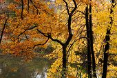 Autumn Picturesque Park Landscape. Autumn Trees With Yellowed Foliage In October Morning Autumn Park poster