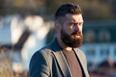 Man Observing Sunset. Guy Stylish Long Beard. Fresh Haircut. Man Bearded Hipster With Mustache Defoc poster