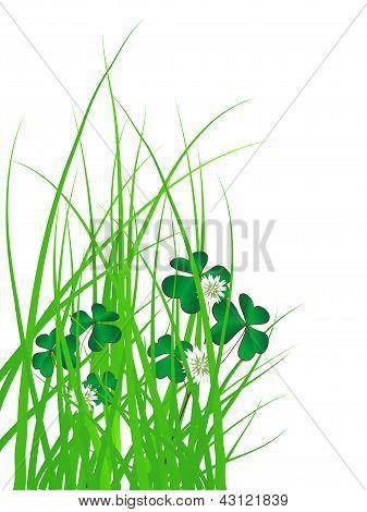 Trevo na grama