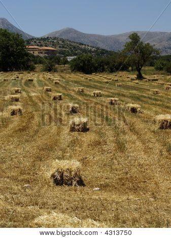 Square Hay Bales In A Valley