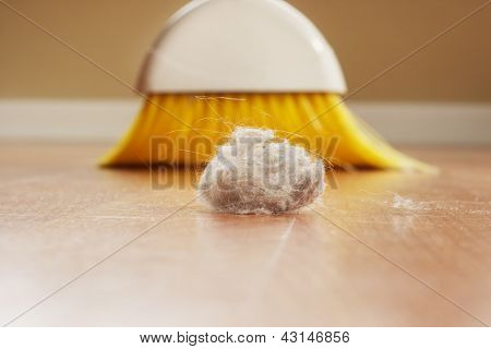 Coelho poeira