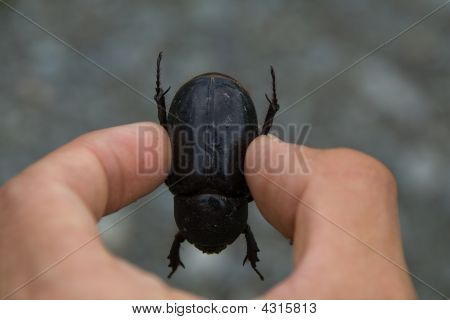 Examining A Beetle