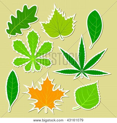 Leaves Of Different Plants