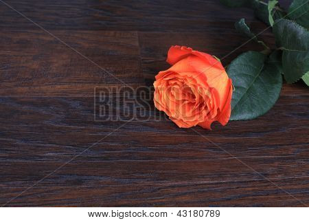 Rose With Copy Space