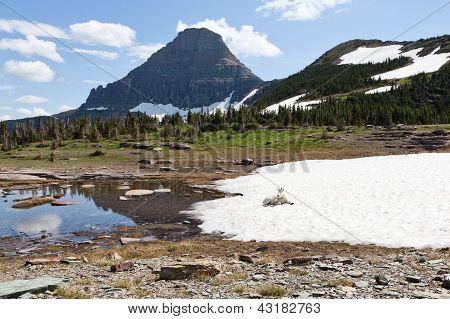 Mountain Goat Landscape