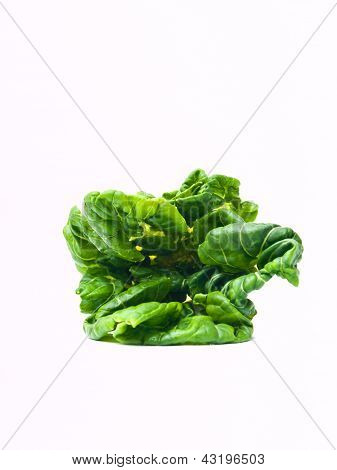 Fresh Baby Bok Choy, Brassica Rapa Chinensis,  Isolated On White Background