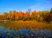 foto of loon  - Bright orange fall foliage reflected among the lily pads on the shores of northern Minnesota - JPG