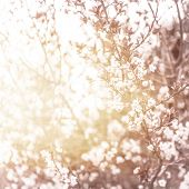picture of sunny season  - Photo of beautiful cherry blossom - JPG