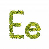 stock photo of storybook  - Leafy storybook font depicting a letter E in upper and lower case - JPG