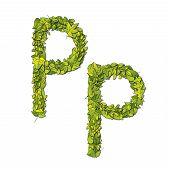 foto of storybook  - Leafy storybook font depicting a letter P in upper and lower case - JPG